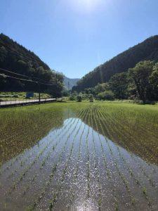 田んぼに現れる「水面富士」